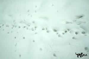 Koty lubią dyskrecję, ale zimą da się poznać ich kocie ścieżki. ;)