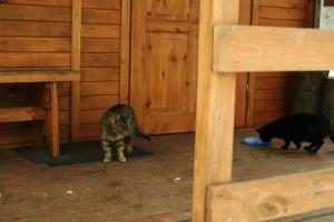 Aby ciachnięte koty się niepotrzebnie nie pchały do klatki-łapki - dokarmialiśmy je na boku.