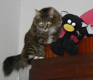Mój kot i mój kot