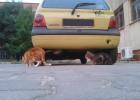 Kotowóz Ewy. Do tego samochodu koty ciągną, jak misie do miodu.