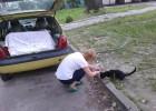 Dokarmianie kota pod Koterią.