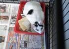 Koteczka - to po nią Ewa głównie przyjechała.