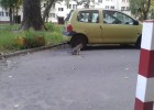 Przy Koterii mamy parę zaprzyjaźnionych kotów.