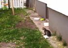 Jeden z dwójki maluchów z podwórka - nieźle dały nam się we znaki, ciągle właziły do klatki-łapki...