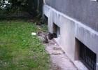 Te kociaki były pod czujną opieką matki. Na poprzednich zdjęciach - obserwowała kociaki zza szyby piwnicznego okienka, gdzie zamieszkują.