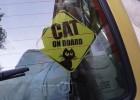 Na kotowozie Ewy to nie jest tylko nalepka - to jest informacja!