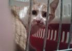 Kot złapany w ręce przez Ewę na prośbę pani Natalii.