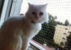 To Cynka - kotka naszej Kasi.