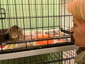Łapacze rzadko spotykają się z wdzięcznością kotów, które łapią. To akurat kot złapany na łapance weekendowej.