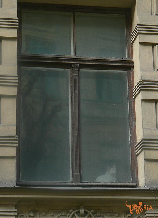 W oknie jednej z genialnych kamienic przy ulicy Alberta